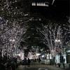 今年初クリスマスツリー発見!!