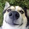 犬並みの鼻の良さ、損か得か?良いか悪いか!