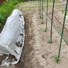 家庭菜園の季節到来。支柱とネットを用意しました。