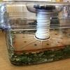 (バラの)手作り活性液 蓬(ヨモギ)の天恵緑汁を作っています。