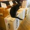 【133日目】久保田ちゃんは高級猫でした