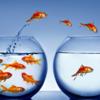 離職防止と採用に効果を発揮するマインドフルネス