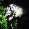 【直リグ最強】おひさしぶりにチヌ釣りに行ってきたオハナシ。【大阪湾】