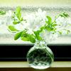 ホワイトのルリマツリをガラスの花瓶でキッチンに♪ 家事をする元気がでます♪