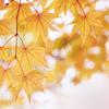 オールドレンズ × 秋色