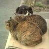 猫日記3 ある広場の野良猫の話
