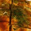 【つくれぽ1000件】お好み焼きの人気レシピ 26選|クックパッド1位の殿堂入り料理