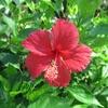 花咲く日が遠い日本-19; エッセンシャルワーカーへの感謝を!