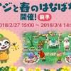 【ポケ森】キャンプ場をお花でいっぱいに!