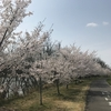ジョギング29.09km・愛知池ロング走&3月のまとめ