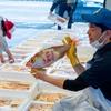 2021年5月21日 小浜漁港 お魚情報