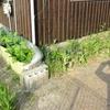 軒下無農薬栽培の開始メモ