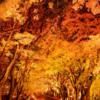 第22回富士河口湖紅葉まつり11月7日~29日開催!!