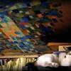 天井画とヒメ