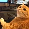 うちのゲーミング猫