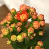 オレンジ色の花ってのもたまには悪くないな
