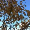 診療所の植栽