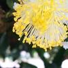 お茶の花が咲く季節