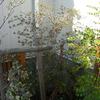 木の実 収穫