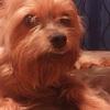 虐待犬が来て…パート2