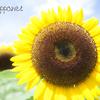 花シリーズ「燦々#01」