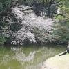 江戸四宿のひとつ内藤新宿から、新宿御苑へ花見ウォーク