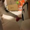 【愛猫日記】毎日アンヌさん#55