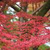 紅葉の季節は京都は行くものじゃないね!