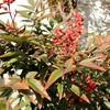 「佐久の季節便り」、「庭木の手入れ」、「小春日和」に…。