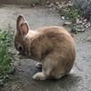 【学年ブログリレー】4年生  ウサギと畑と池とチョウと