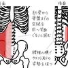 ヨガノート(6)腹横筋を鍛える!ウエストくびれ&腰痛予防コルセット - 印刷OK!お家ヨガ入門応援企画