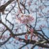 X-E1で撮った桜写真