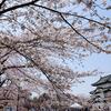 弘前城さくらまつりブルーインパルス本番