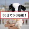 【ダイエット】36日間で体重を6.8kg落とすまでの過程。
