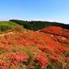 【大和葛城山】真っ赤なツツジがダイヤモンドのごとく輝きを放つ、大阪府最高峰への山旅
