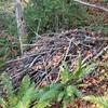 枝の山積みの検証