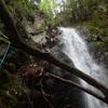 三峰山ワサビ谷へ。登れる滝の多いお手軽沢