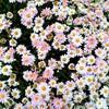 今日も草花がキレイでした