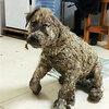 虐待の末に建設現場に置き去りにされた犬がもう一度人と生活を始めるまで
