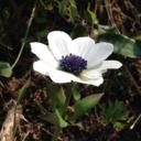 夢実現!DIYで廃墟を花あふれる館へ再生させるブログ
