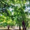 新緑の季節!森林浴と花たちに癒される!