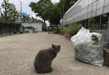 """大阪の北堀江で、暮らしやすい""""まち""""について考えてみた。"""
