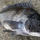 夢と魚はデカいほうがいい。
