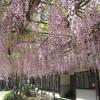 藤の花:香川の名所3選