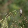 2019年9月22日などの鳥撮り-関東近辺