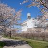 クリーンセンターの桜
