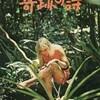 飛行機墜落 ジャングルで生存した少女