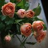 香り豊かなRose&Rose