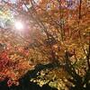 【紅葉】時には綺麗な景色を【桜】