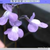 C#、WPF、バイリニア法での画像の拡大縮小変換、24bitカラー対応とマルチスレッド対応版